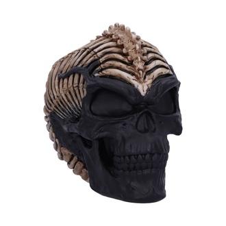 Décoration Crâne Colonne vertébrale, NNM